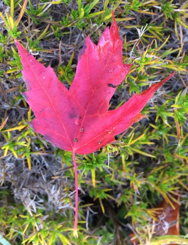leaf 10-9