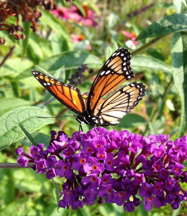 monarch 8-2110